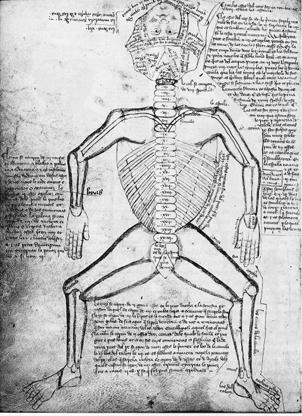 Estudo anatômico creditado a Galeno