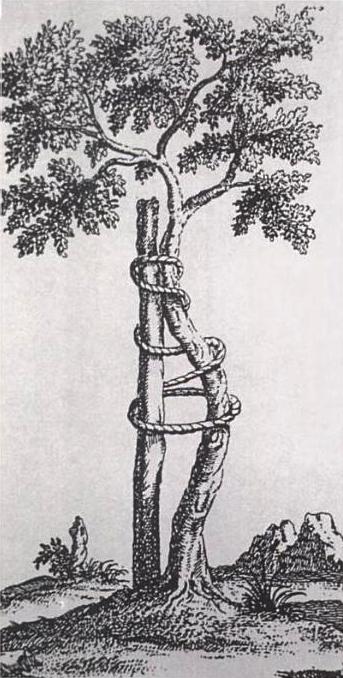 A árvore de Andry - símbolo da ortopedia